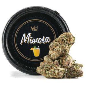 Buy Mimosa